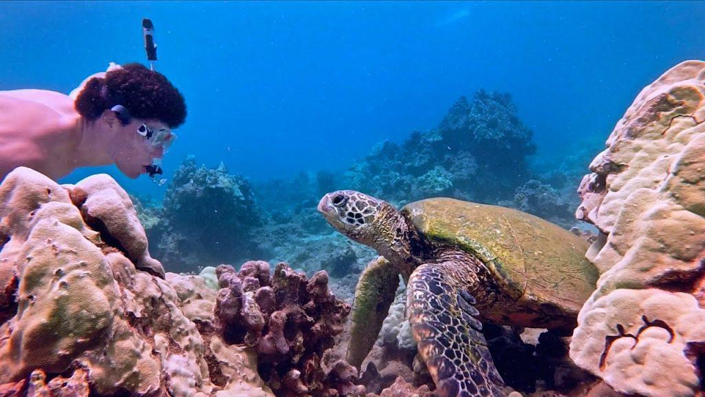 Maui activities Kahana Beach Resort swim with sea turtles